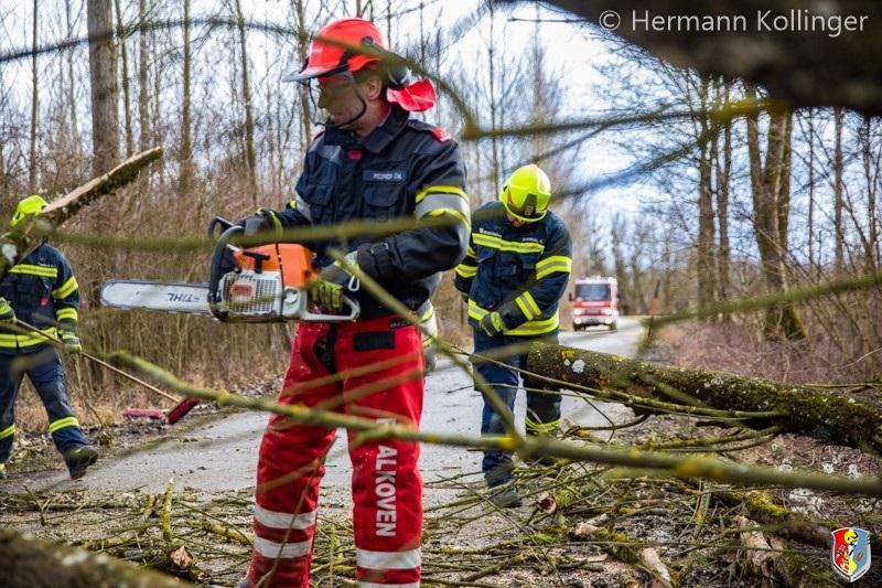 Sturmbaum100220_Kollinger-3