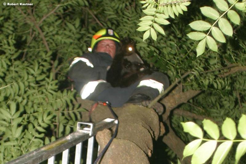 Katze am Baum / Foto: Kasi