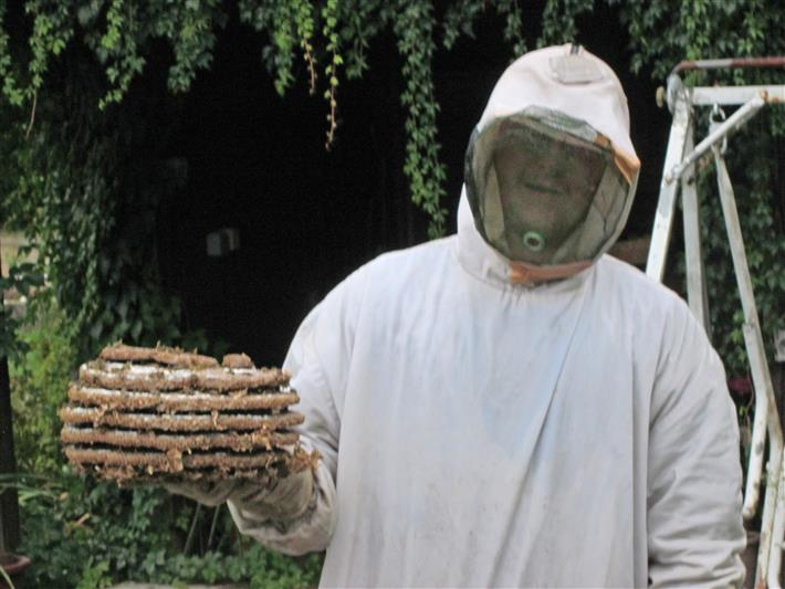 Wespen-Einsatz