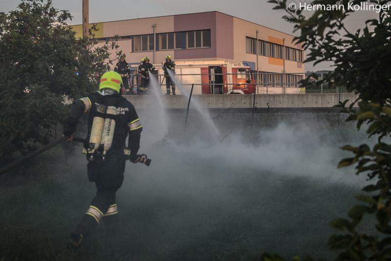 Wiesenbrand (Foto: Kolli)