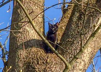 Katze am Baum / Foto: Göttfert