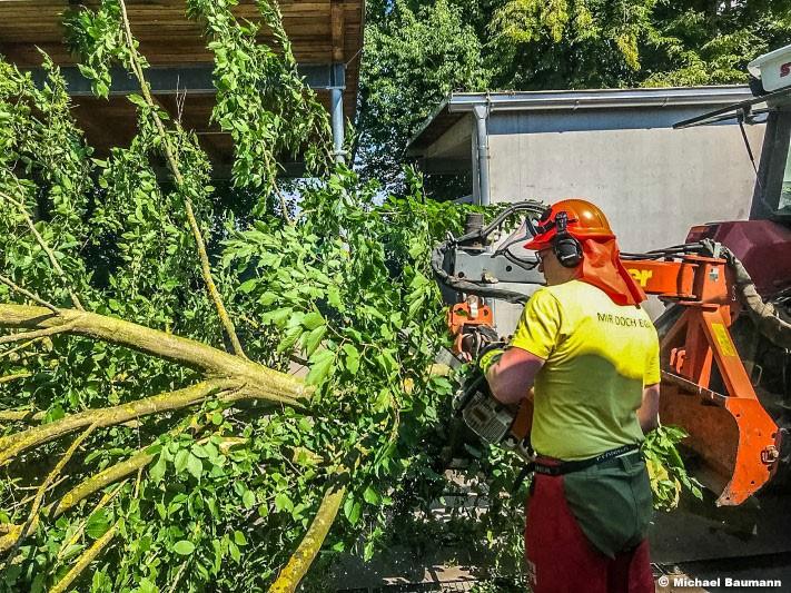 04.06.2018: Notfällung mehrerer Bäume beim Institut Hartheim